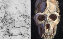 animal sketches and a skull drawing