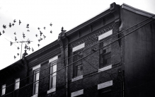 Black and white photograph of the roofs of houses with pigeons flying overhead.