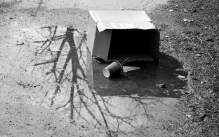 Black and white photo of a cardboard box and a paper coffe cup sitting in a puddle, with a reflection of a tree in the puddle.