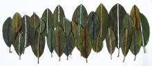 sewn leaves