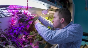 Man tending orchids in greenhouse