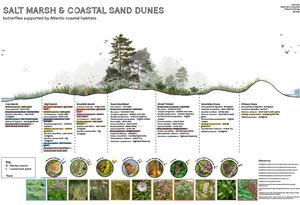 Salt Marsh and Coastal Sand Dunes