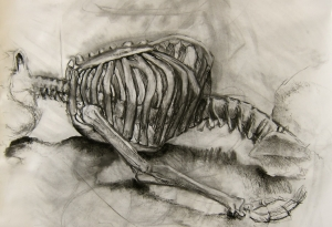 Lauren Miller, a charcoal drawing of a skeleton