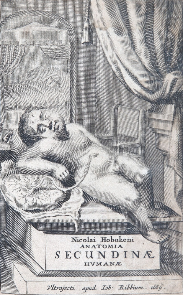 Nicolaas Hoboken, Anatomia secundinae humanae
