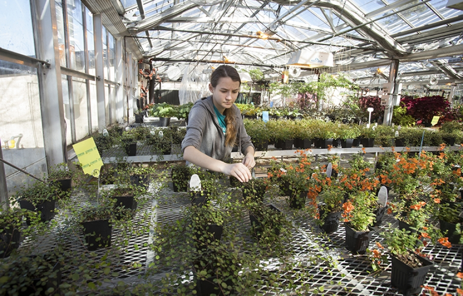 Student working in greenhouse