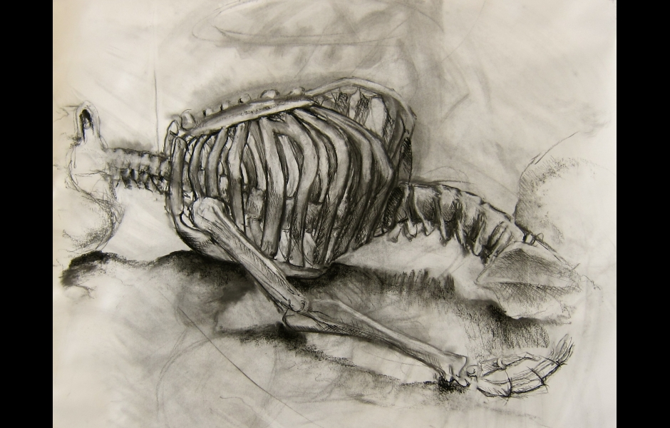 A drawing of a skeleton