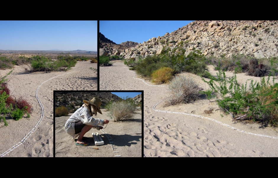 collage of photos of desert